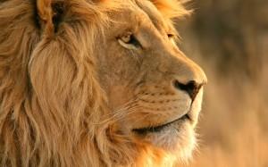 Leão que simboliza o imposto de renda